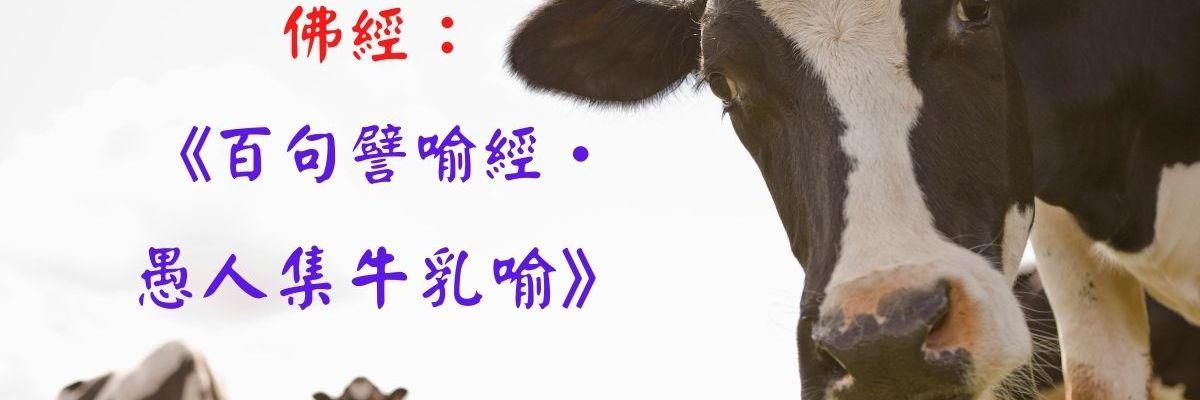 佛經: 《百句譬喻經• 愚人集牛乳喻》