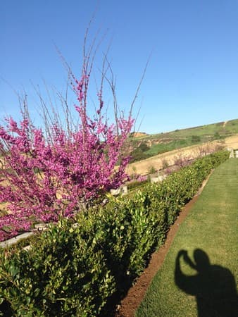 供奉因海玉尊聖體的聖地上方,本該已經枯萎的紅花樹,竟然生意盎然,有別於同時等距栽種的紅花樹。